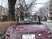 Sakura_11
