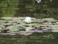 Lotus_22