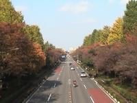 Daigakudori