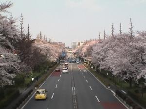 Daigaku_24