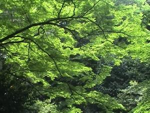 Daigakunomori