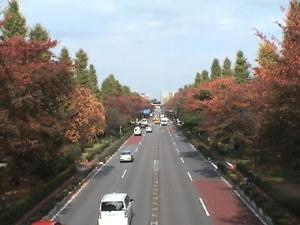 Daigakutori