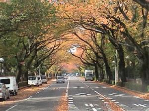 Sakura_tori
