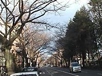 Sakuratori