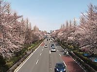 Daigakutori_3