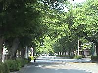Sakuradori