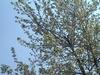 konara_forest