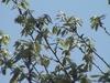 konara_leaves