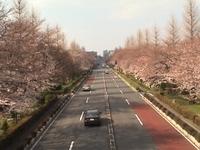 Sakura_2_3